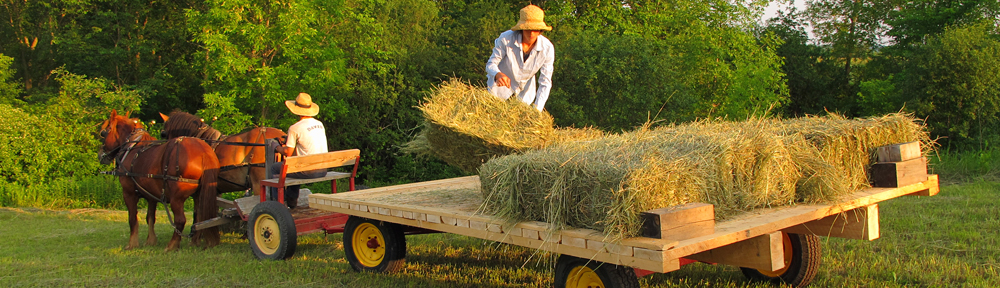 Haying at Full and By Farm in Essex, NY.