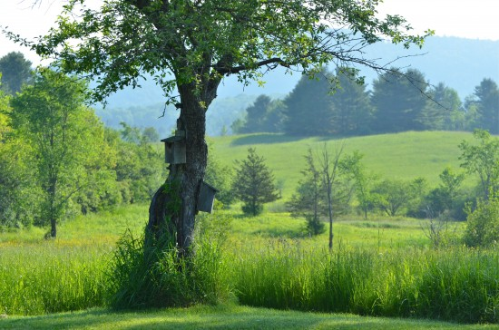 Jill Piper's photograph of the Atea Ring's blissful Champlain Valley setting.