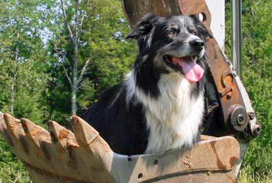 Kilimanjaro puts his best paw forward to help build a new shelter for dogs and cats in need of a new home. (Image courtesy Valley News)