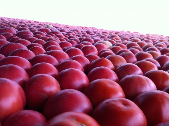 Tomatoes (Image courtesy of Essex Farm)