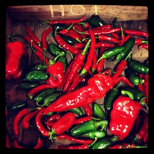 Hot peppers at Full and By Farm (photo by virtualdavis)