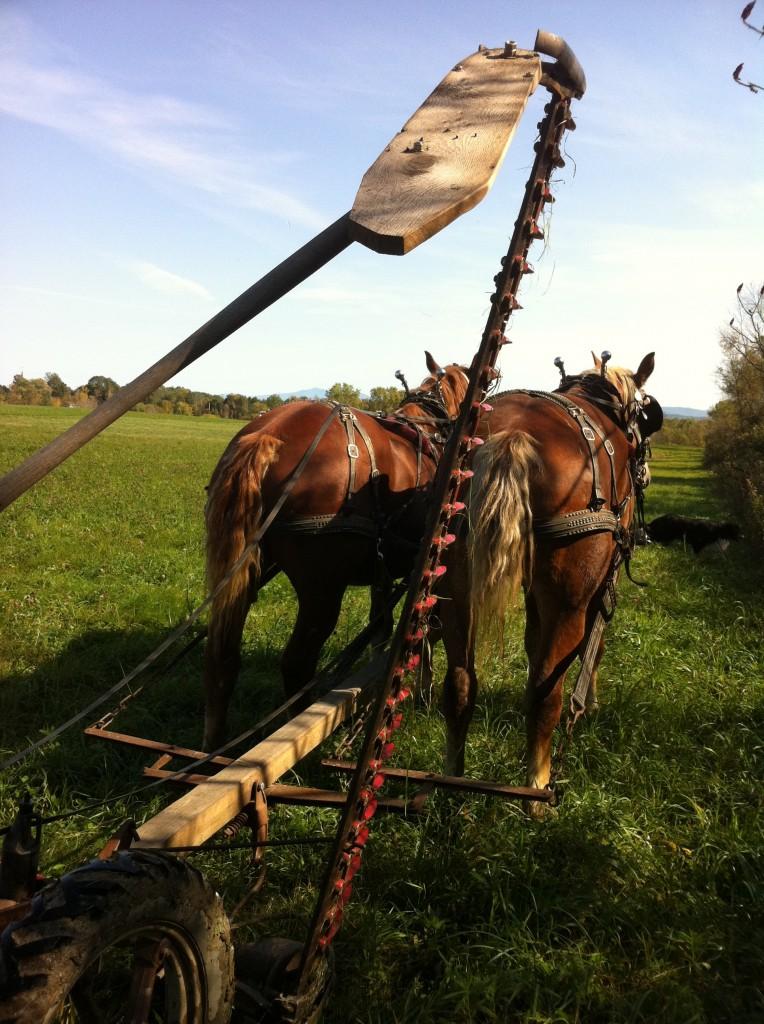 Draft horse power farm