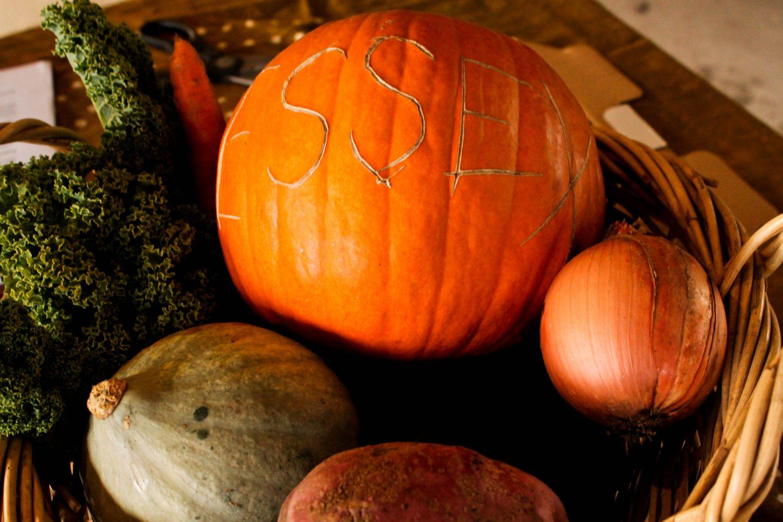 Essex Farm fall vegetables
