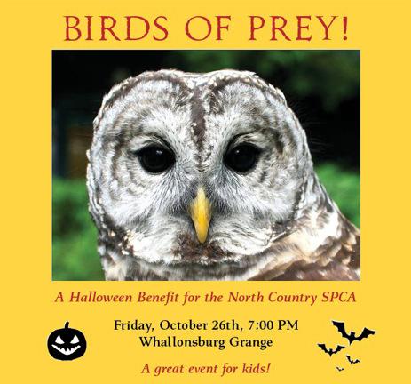birds of prey poster
