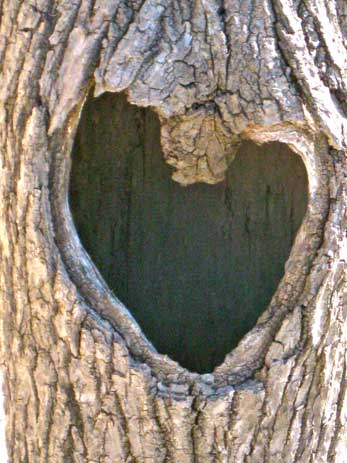 A stump found in Wadhams with a heart hole in it