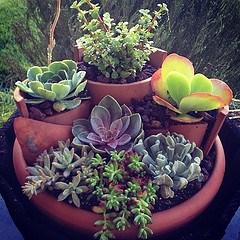 Container Gardening (Credit: ballookey)