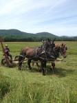05 Hay making