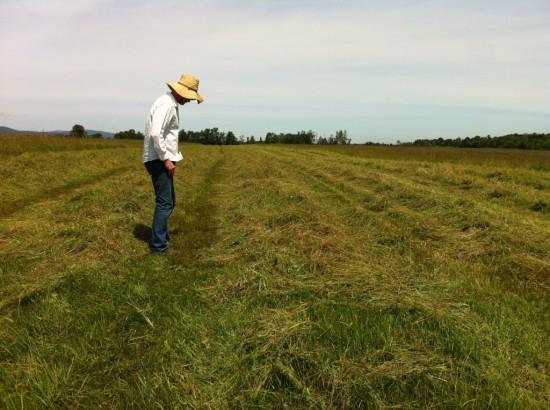 Field at Essex Farm