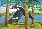 Pileated Woodpecker by Randy Boutilier