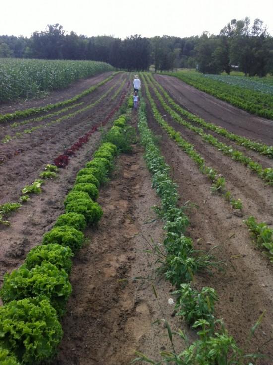 Through the field at Essex Farm. (Credit Kristin Kimball)