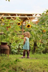 Kindergartener by the sunflower and pumpkin garden