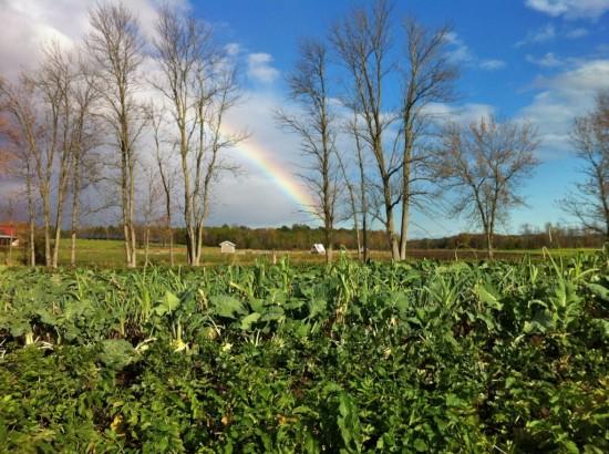 Rainbow over Essex Farm
