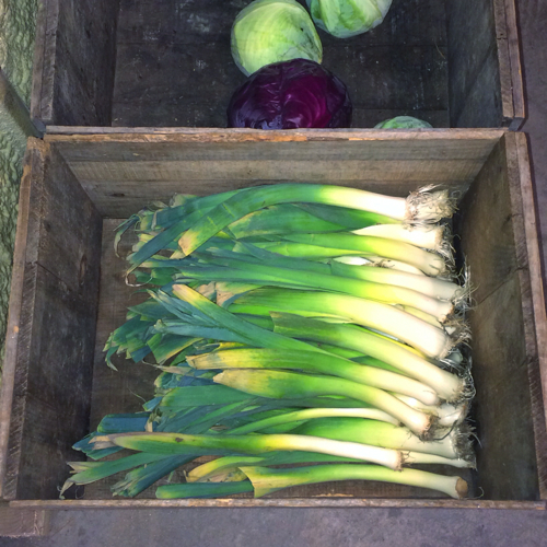 Cabbage and leeks at Full and By Farm
