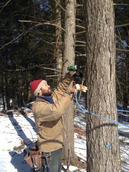 06 Tapping trees at Reber Rock Farm