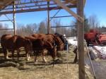 07 Waiting Horses at Reber Rock Farm