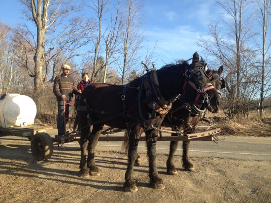 RRF draft horses pulling a cart with sugar sap (Credit: Racey Bingham)