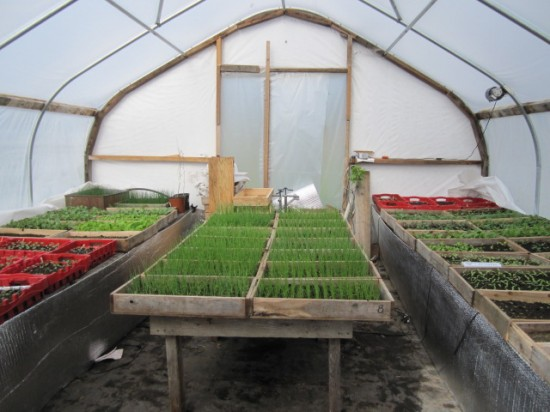 Greenhouse at Full and By Farm. (Credit: Sara Kurak)