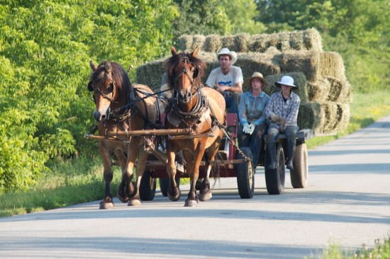 Bringing in hay at Full and By Farm. (Credit: Sara Kurak)