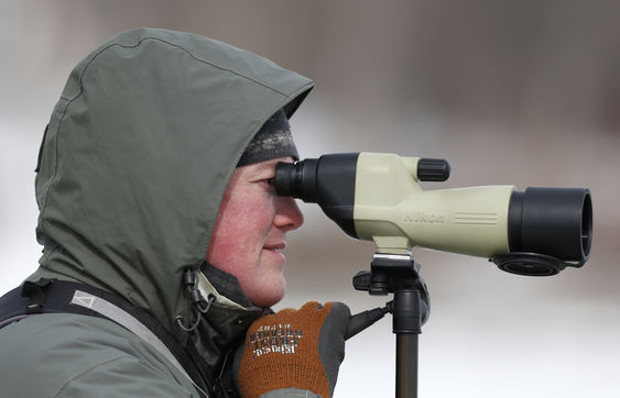 Chance to see rare water birds draws birders to Essex-Charlotte ferry channel (Credit:  Mike Groll/AP)