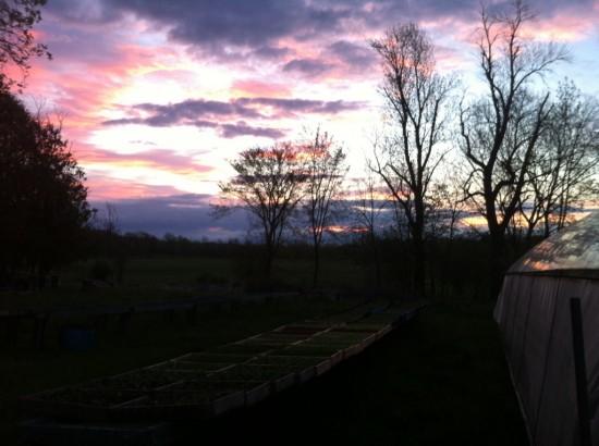 Sunrise at Essex Farm in Essex, NY. (Credit: Kristin Kimball)