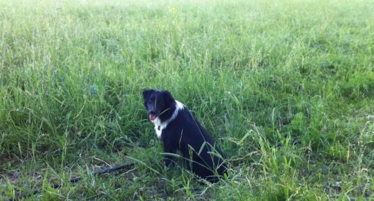 Essex Farm field and dog (Credit: Kristin Kimball)