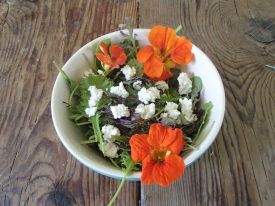 Mesclun and spinach salad topped with spicy nasturtiums and fresh goat cheese (Photo: Dillion Klepetar)