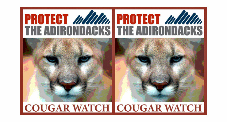 Cougar Watch (Credit: Protect the Adirondacks!)