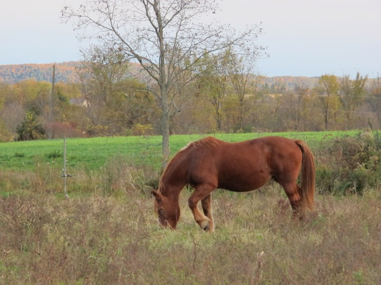 Horse at Full and By Farm (Credit: virtualdavis)