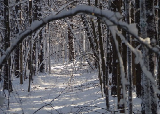 Trail and branches covered in heavy snow (Credit: CATS)