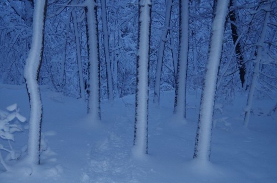 Snow covered forest (Credit: CATS)