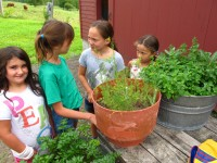Harvesting Herbs at Full and By Farm