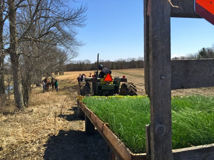 The first planting of the 2015 season. (Credit: Krisitin Kimball)