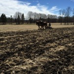 Readying the fields for planting at Essex Farm (Credit: Kristin Kimball)