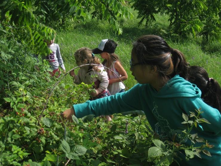 Kids searching the gardens (Credit: Jess Wimett)