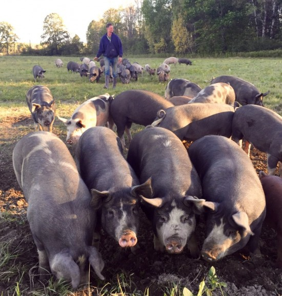 Mark among the pigs in the field at Essex Farm. (Credit: Kristin Kimball)