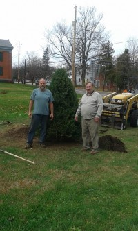 Balsam Fir tree planted behind Town Hall. (Credit: Town of Essex)