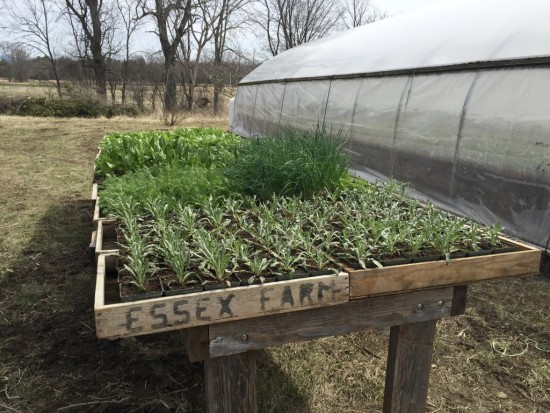 Plants sprouting at Essex Farm (Credit: Kristin Kimball)