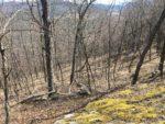 Sprig Hill