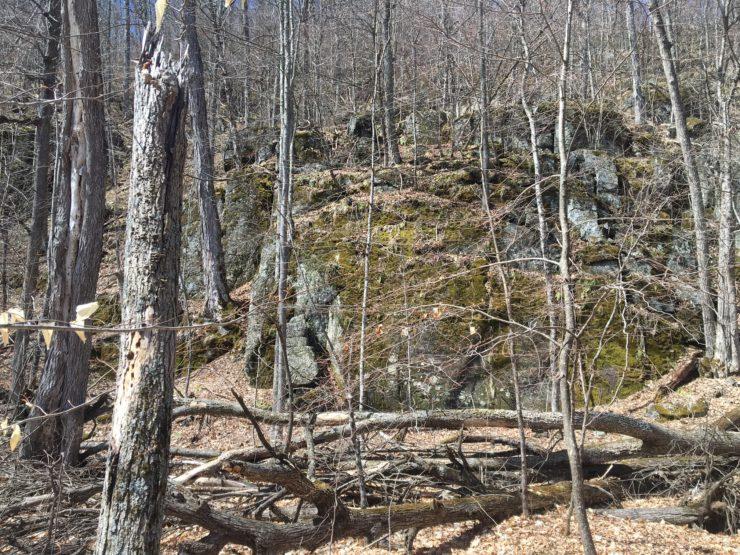 Westport Woods Scene