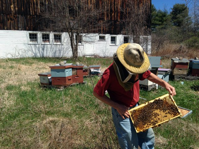 Beekeeper Tim McGarry