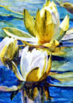 """Water Lily"" Watercolor Painting by Ann Pember"