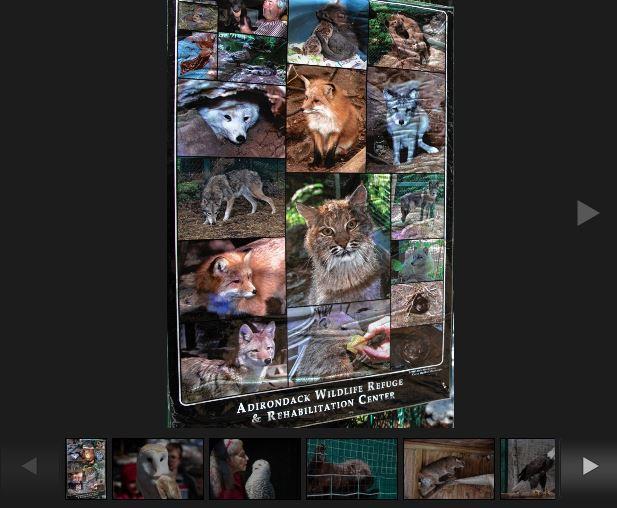 Adirondack Wildlife Refuge Photo Gallery Screenshot