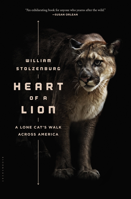Heart of a Lion: A Lone Cat's Walk Across America by William Stolzenburg