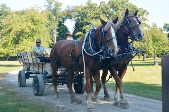 Fort Ticonderoga's Heritage Harvest and Horse Festival takes place on October 1, 2016. (Credit: Fort Ticonderoga)