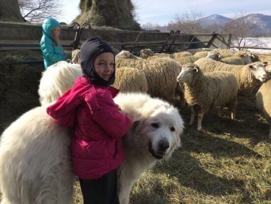 Essex Farm Dog