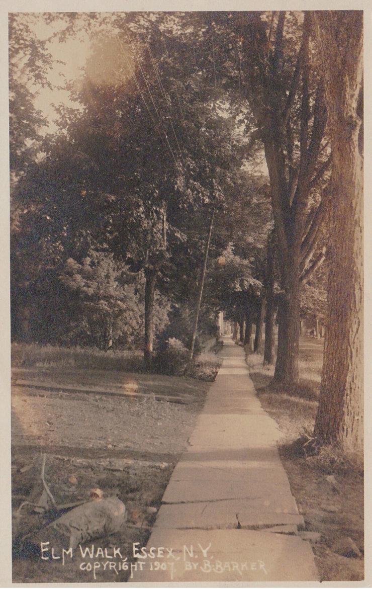 Vintage Postcard: Elm Walk, Essex, NY, 1907