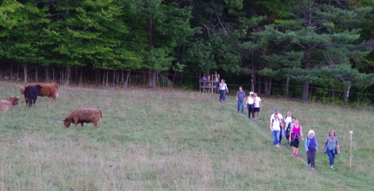 The Farm-to-Fest Hike will pass through some of DaCy Meadows pastures and the local bovine residents. (Credit: CATS)
