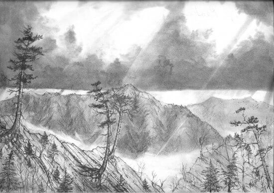 Old Growth Forest Sketch (Credit: Rob Leverett)