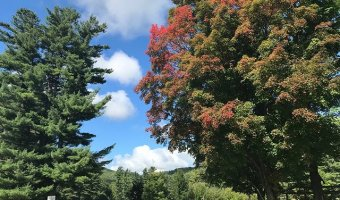 The first signs of fall have appeared in the Adirondacks, which may have better fall foliage results than the rest of the state.
