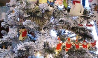 Ticonderoga Historical Society Cat Tree 2017